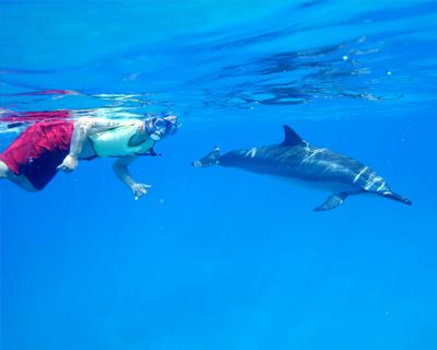 与海豚浮潜(含午餐)